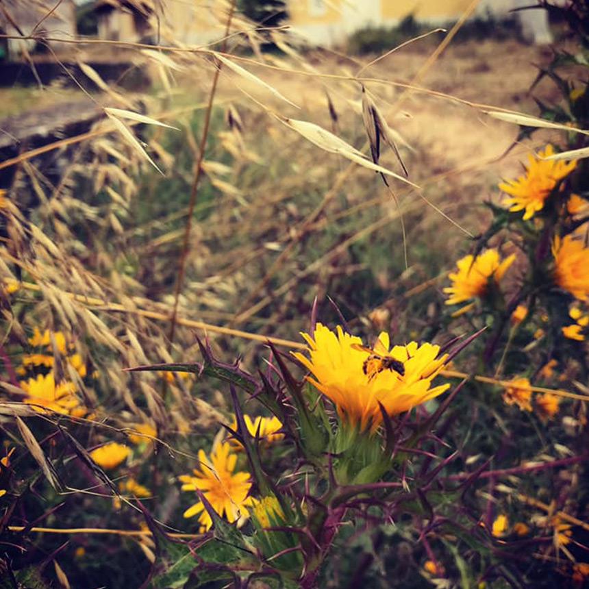 GEOTA - Cultive boas causas<br/>NIF: 501 716 610